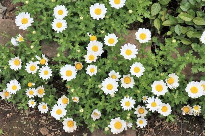 春 庭の花_d0150720_17312793.jpg