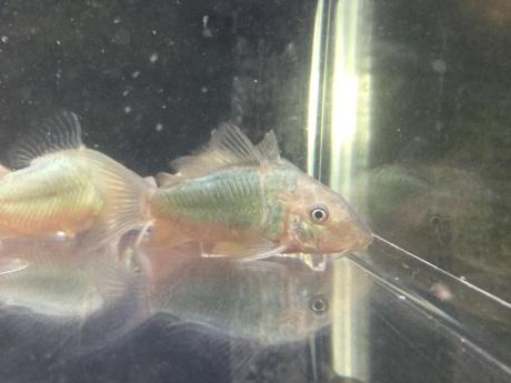 200408 熱帯魚 金魚 水草_f0189122_12204656.jpeg