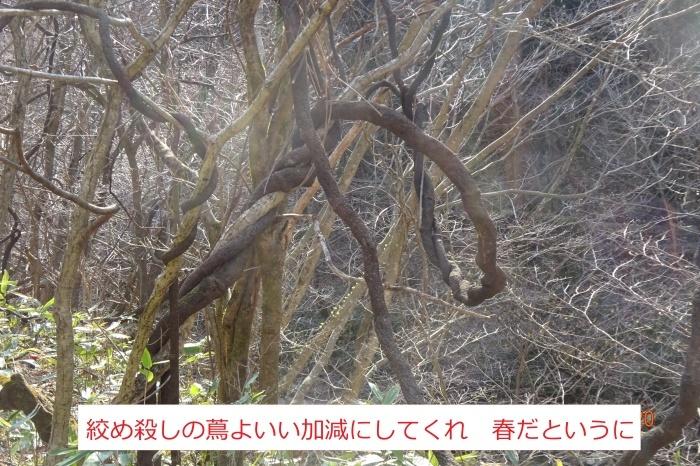 オボコンベ山~桐ノ目山_e0265627_11463851.jpg