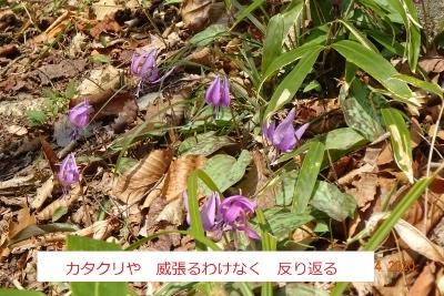 オボコンベ山~桐ノ目山_e0265627_11514198.jpg