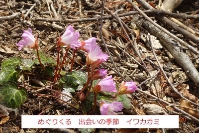 オボコンベ山~桐ノ目山_e0265627_11515874.jpg