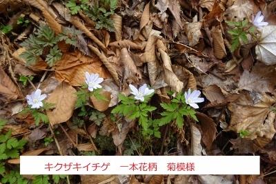 オボコンベ山~桐ノ目山_e0265627_11520853.jpg