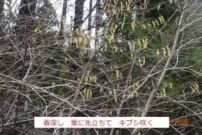 オボコンベ山~桐ノ目山_e0265627_11521780.jpg
