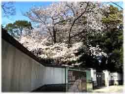 ウォーキングの道すがら、庭園美術館の桜は_d0221430_21280220.jpg