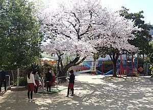 Spring Crisis_e0325335_16383384.jpg