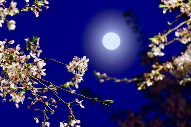 """美しい桜と、スーパームーンと、命と、そして私たちの""""愛(思いやり)""""と。_b0298740_01495352.jpg"""
