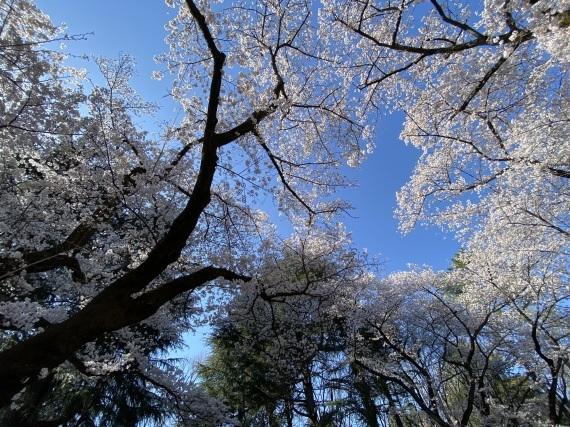 お久しぶりすぎて…もう春。_f0068145_18574508.jpg
