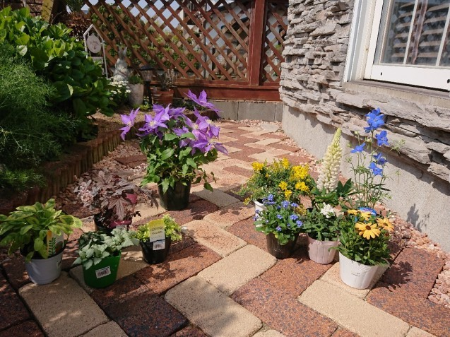 庭仕事 ~寄せ植え~_f0323446_13274376.jpg