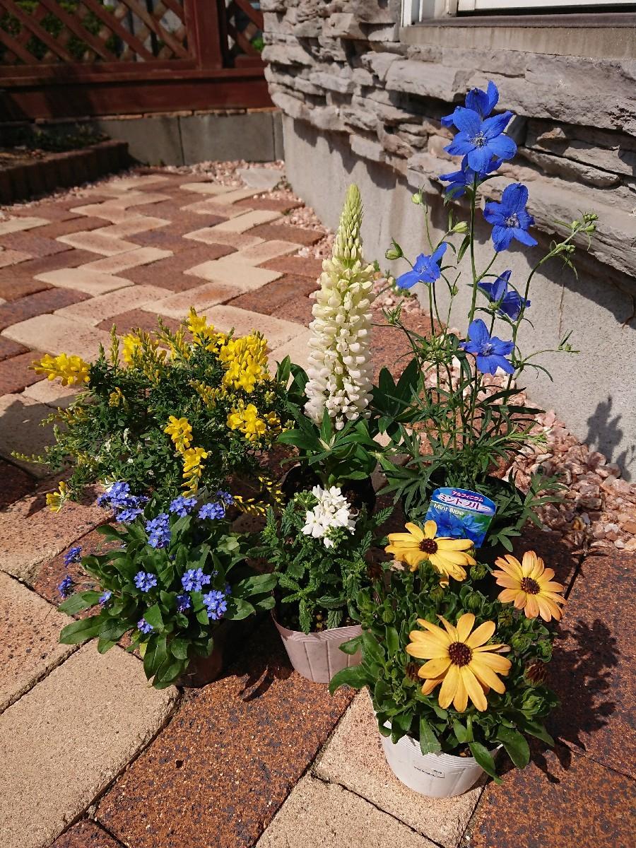 庭仕事 ~寄せ植え~_f0323446_13274378.jpg