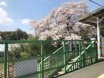 桃の花・車窓から_f0019247_16322036.jpg