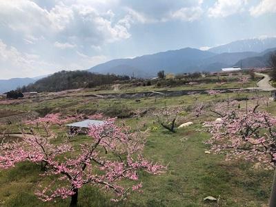 桃の花・車窓から_f0019247_1633377.jpg
