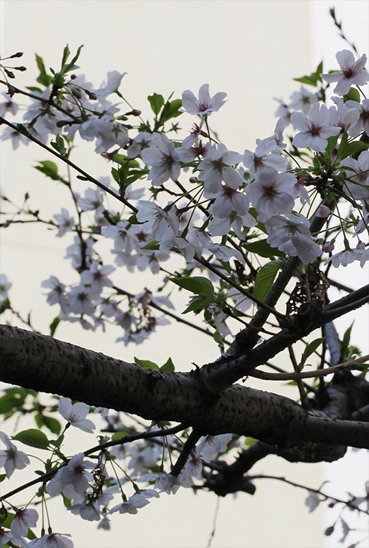 京都市中京区_b0186148_21110669.jpg