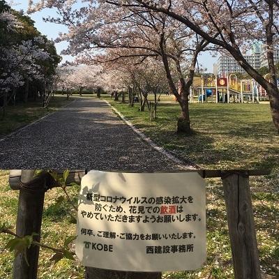 デカパンと今日の桜と王子。_f0372998_20055522.jpg