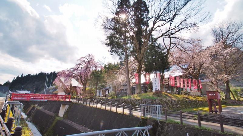 千手院の枝垂れ桜 ③_c0336902_21400731.jpg