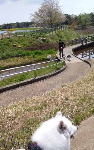 芝桜とネモフィラ 4月9日 [木]_e0018604_23200406.jpg