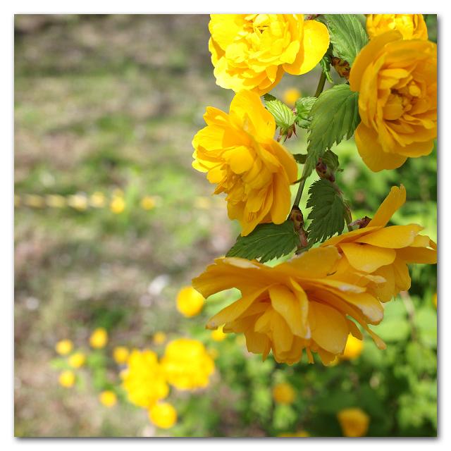 #2613 yellow_e0175405_08215289.jpg