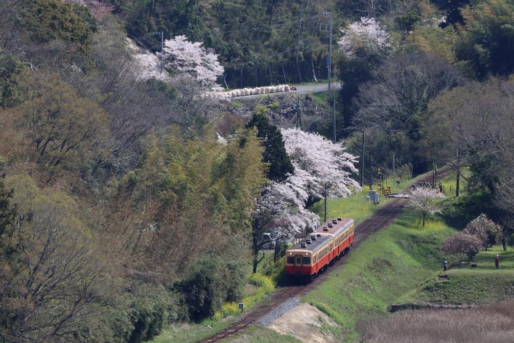 台風を乗り越えて春が来た - 2020年・秩父鉄道 -_b0190710_22074696.jpg