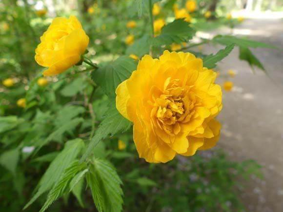 花々と新緑 京都御苑_e0048413_22070066.jpg