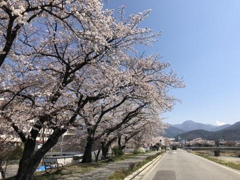 桜咲く季節_d0105615_11432151.jpeg