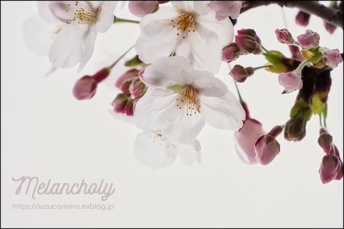 Melancholyな春_f0100215_23095346.jpg