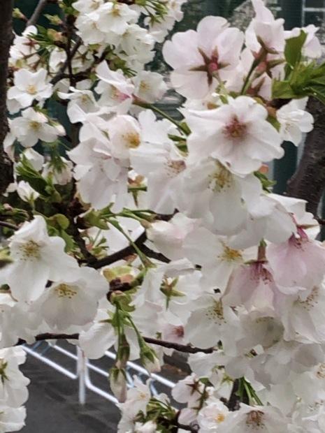 身近な春_b0142417_11482051.jpg