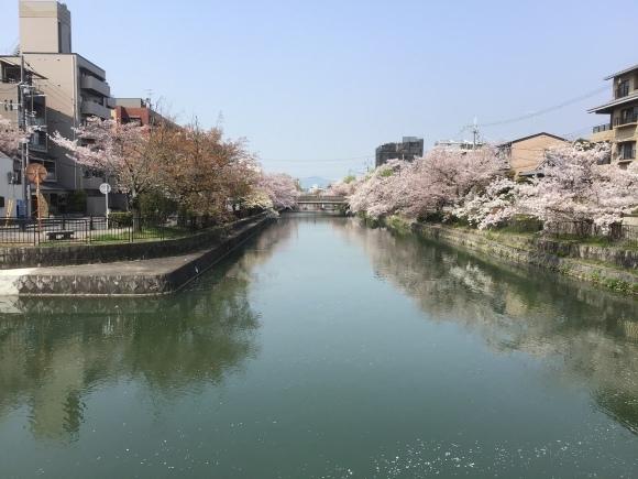 京のさくら、岡崎 琵琶湖疎水_e0230141_15455060.jpeg