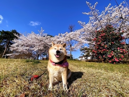 桜雲(おううん)_b0314043_08411619.jpg