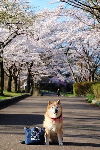 桜雲(おううん)_b0314043_08503062.jpg
