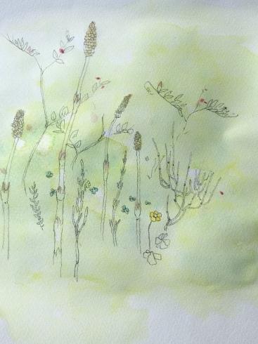 春の花。_c0160745_15344956.jpeg
