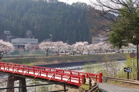 のどかに桜三昧_f0114346_12052206.jpg