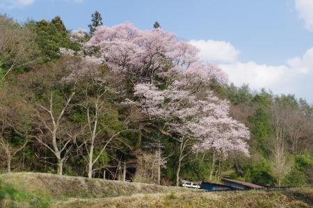 のどかに桜三昧_f0114346_12054008.jpg