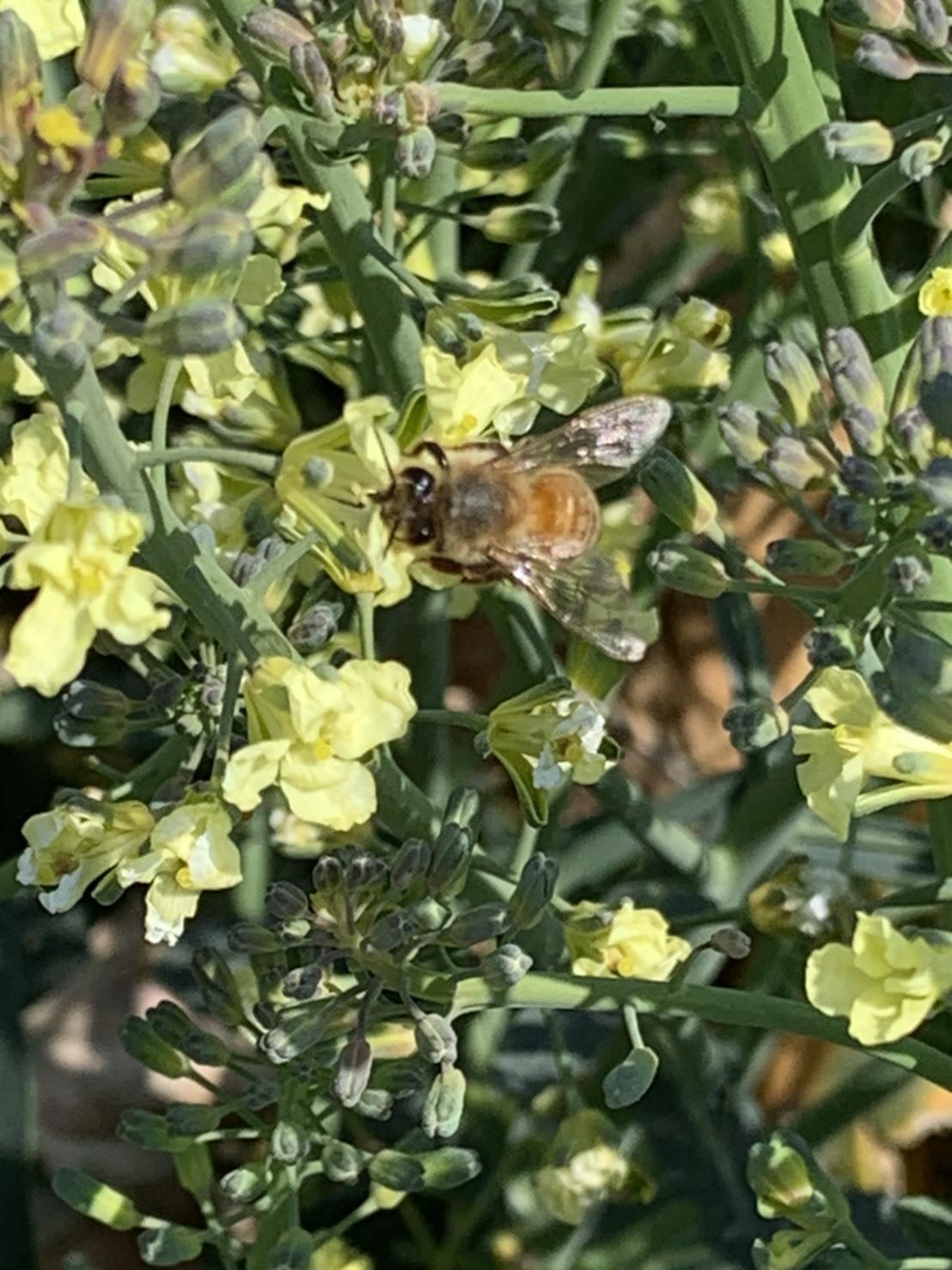花が咲き乱れ 蜂が沢山寄ってくる よしよし_c0222448_16400345.jpeg