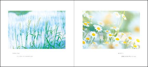 はるひ 写真集『癒やしの雫』4月9日発売!_c0142549_20500155.jpg