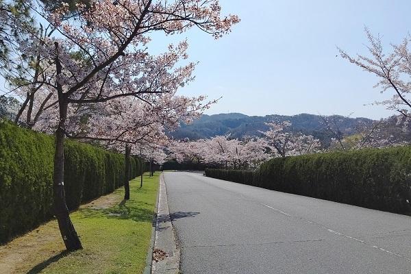 桜は散り始め_b0328557_19454721.jpg