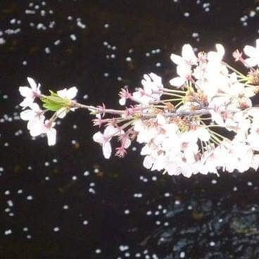 聖木曜日の前の晩。。。Pink supermoonが世界を照らしました。。。☆*+☆*+☆*..._a0053662_11300347.jpg
