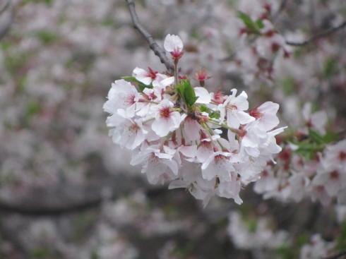 緊急事態宣言8日目。。。渋谷のラジオ☆明日4月16日☆12時よりナビゲーター&パーソナリティーとしてコロナと戦っている近況をお話させていただきます*++☆*+☆*+  _a0053662_15092832.jpg