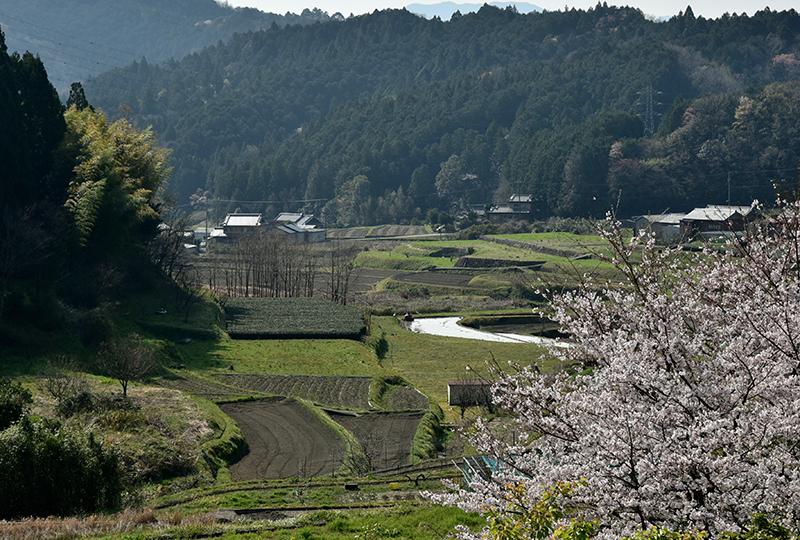 和歌山街道を行く_e0164563_15384888.jpg