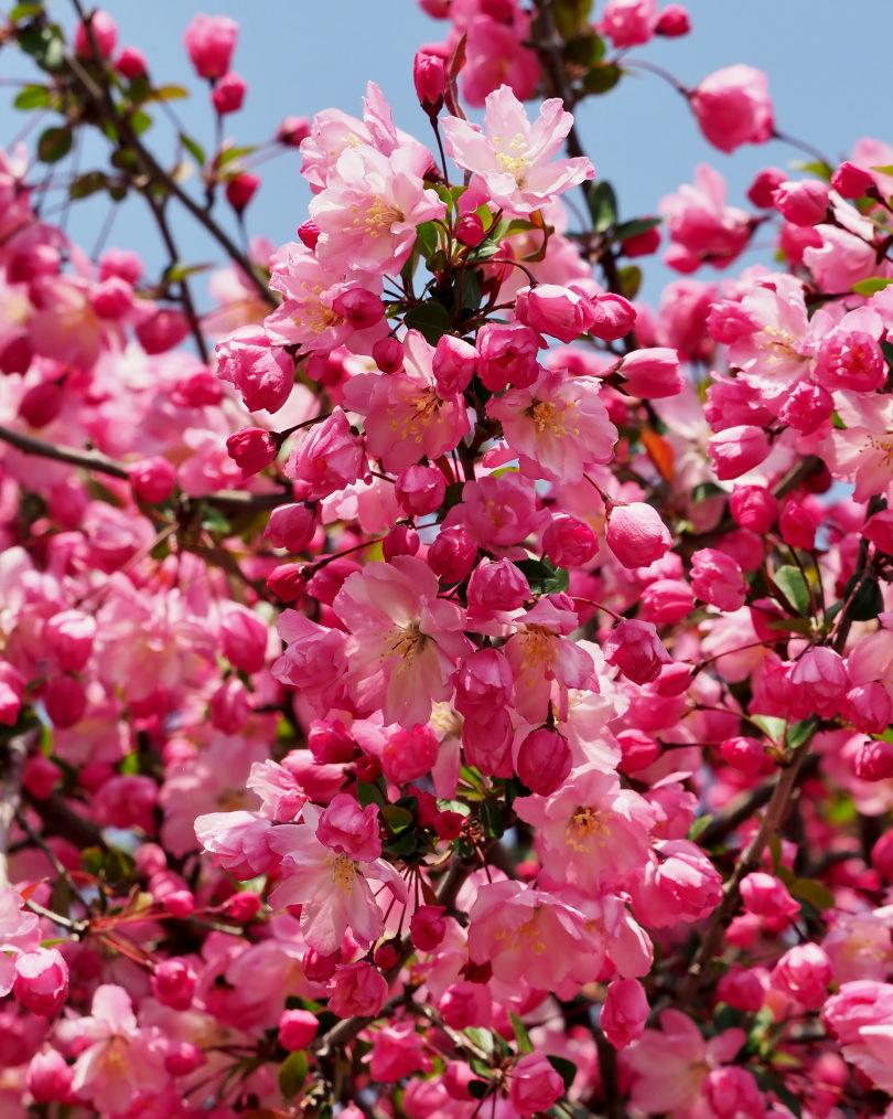 箕輪城跡で 春よ 春よ_c0305565_17351160.jpg