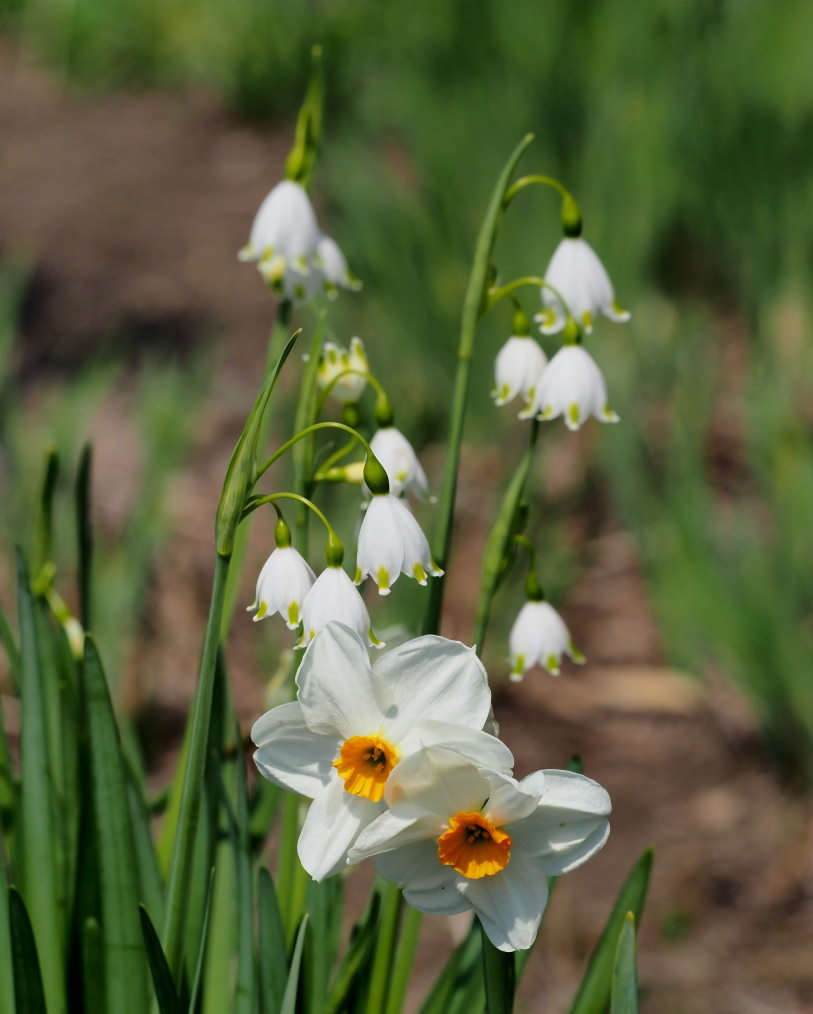 箕輪城跡で 春よ 春よ_c0305565_17352992.jpg