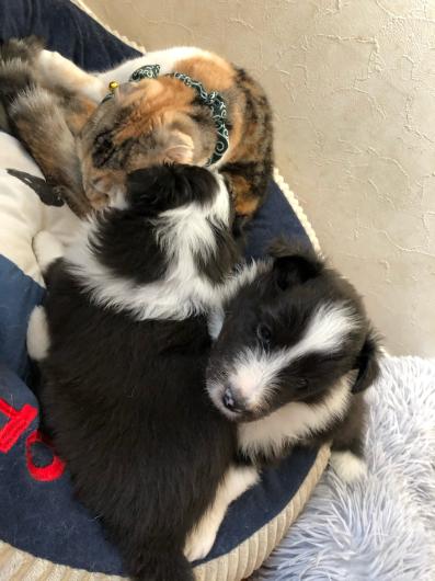 子犬とにゃんこ_f0126965_15454446.jpg
