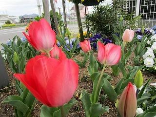 板野生活 ~いつの間にか春~_c0218368_14101113.jpg