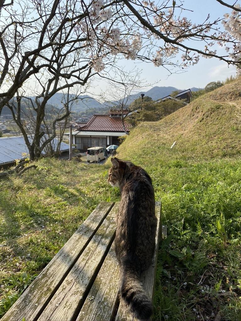 裏山の桜だより⑥ 2020 〜ウグちゃんと一緒に〜_c0334574_20462837.jpeg