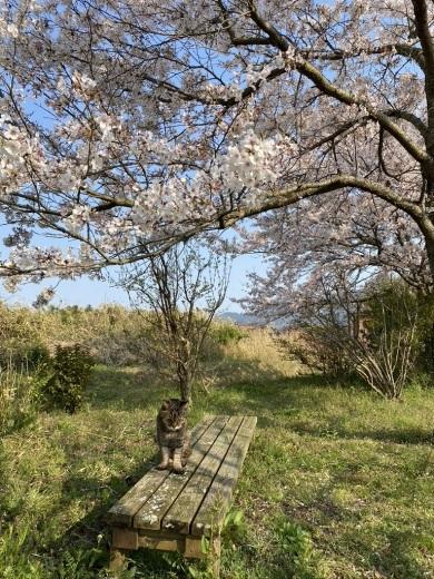 裏山の桜だより⑥ 2020 〜ウグちゃんと一緒に〜_c0334574_20463332.jpeg