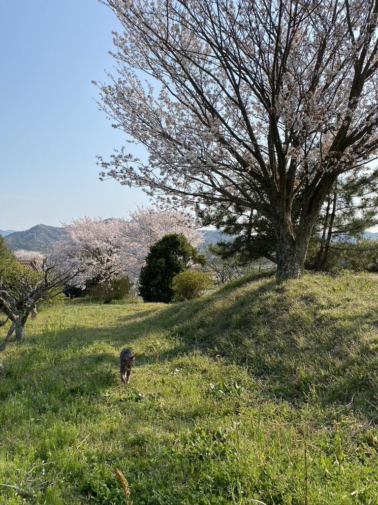 裏山の桜だより⑥ 2020 〜ウグちゃんと一緒に〜_c0334574_20471336.jpeg