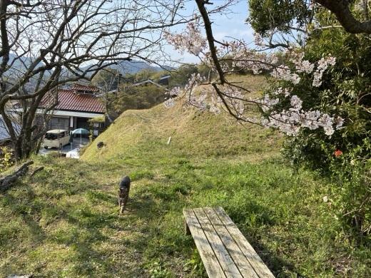 裏山の桜だより⑥ 2020 〜ウグちゃんと一緒に〜_c0334574_20493897.jpeg
