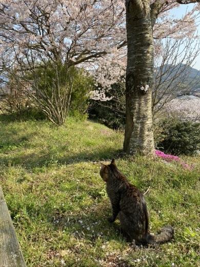 裏山の桜だより⑥ 2020 〜ウグちゃんと一緒に〜_c0334574_20494739.jpeg
