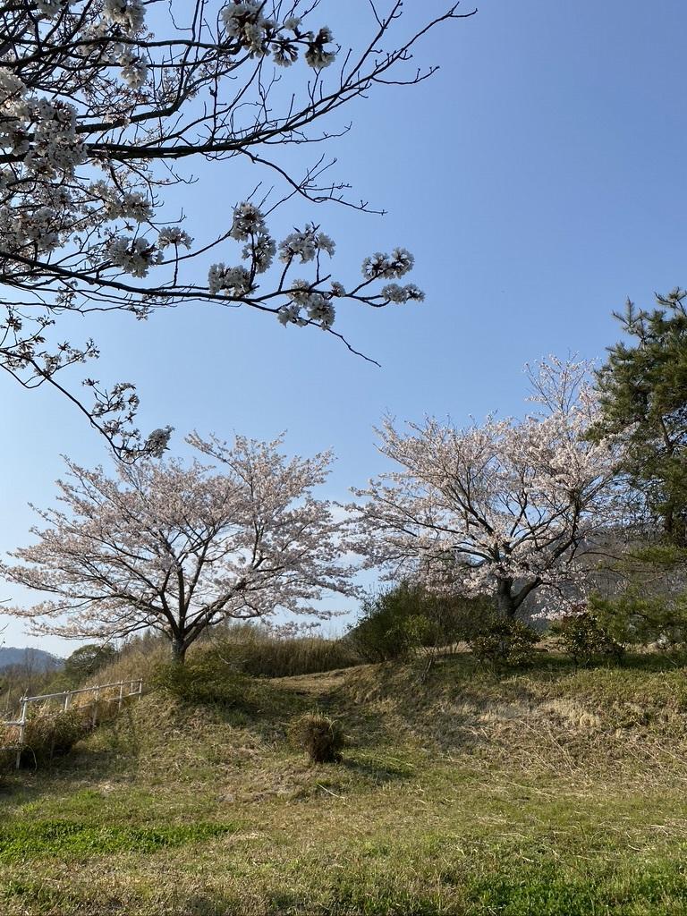 裏山の桜だより⑥ 2020 〜ウグちゃんと一緒に〜_c0334574_20510479.jpeg