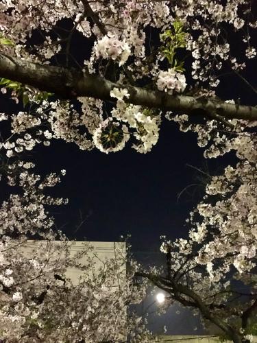 続、桜休み_e0025376_01373901.jpg