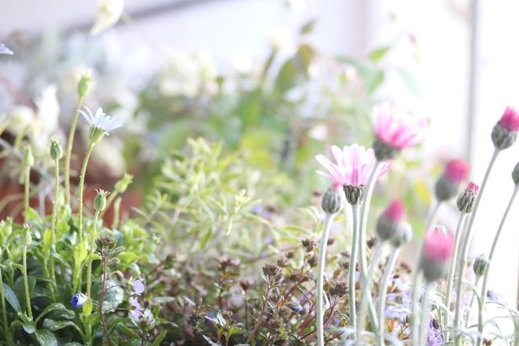 お花に癒される_e0237680_17025332.jpeg