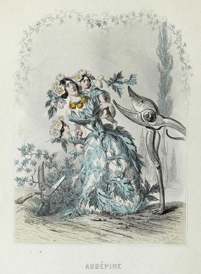 J・J・グランヴィル:Les fleurs animées_c0084183_14151964.jpg